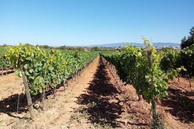 Algarve Wines Route, Lagos, PORTUGAL