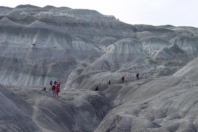 Walk through a lunar landscape strewn with petrified logs and dinosaur fossils on thisEl Calafateday trip to La Leona Petrified Forest. During an easygoing 7-mile (12-km) hike, learn about the area's unique geological features from a knowledgeable guide. Beforehand, visit the historic Hotel La Leona, where mountaineers and bandits like Butch Cassidy and the Sundance Kid once stayed. Enjoy air-conditioned coach transport between destinations and soak up views of Argentino Lake, Santa Cruz and La Leona rivers, and Mt Fitz Roy along the way.
