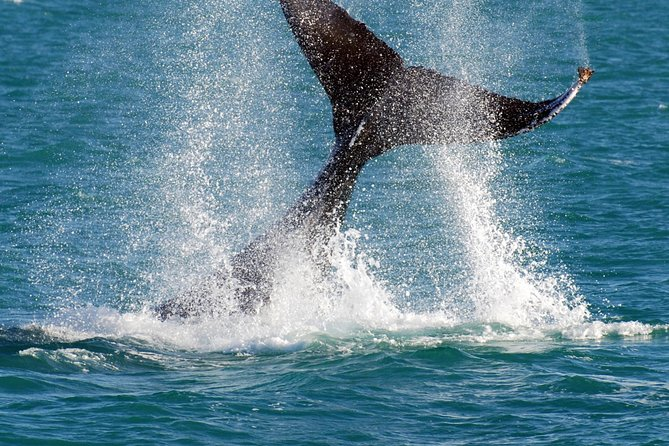Whale-Watching Cruise and Hillarys Boat Harbour Day Trip from Perth, Perth, AUSTRALIA