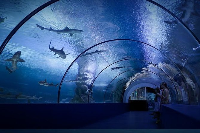 The world's biggest tunnel aquarium, real sized plane and ship wreckage, more than 200 sharks - this is the Antalya Aquarium! Thousands of types of fish, very special creatures from the oceans and beautiful underwater decorations wait to meet with you. After viewing 40 thematic aquariums you will go onto the longest tunnel aquarium in the world which is 131 meters long. With a total of 7.5 million liters of water, you are able to watch the sharks being fed every day at 12pm and the Carpe Koi being fed with bottles at 2pm. Antalya Aquarium is the most lively attraction center you can see. Tour is limited to a maximum of 10 travelers.