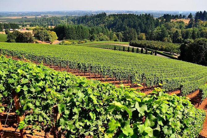 MÁS FOTOS, Azuga wine tasting on a day trip from Brasov