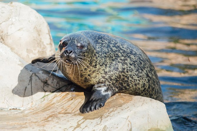 Be transported into an amazing underwater world at SEA LIFE Weymouth! With over 1,000 creatures to see, Caribbean Cove, 9 talks and feeding demonstrations, splash zone pool all included in admission it is an awesome day out.<br>