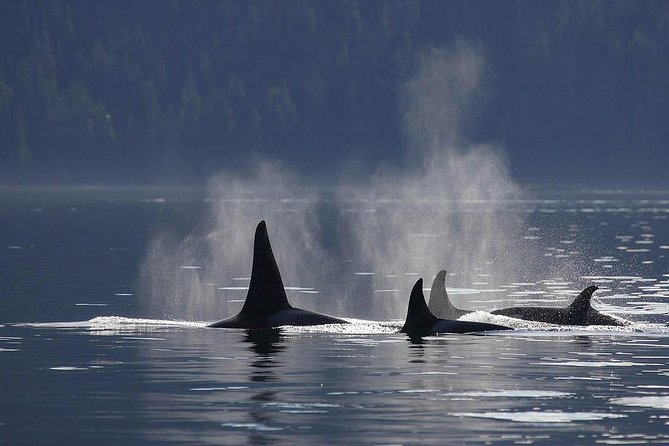 Victoria Shore Excursion: Whale Watching & Butchart Gardens, Isla de Vancouver, CANADA