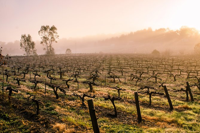 This tour caters for the comfortable at your pace trip to view and experience South Australia's beautiful Barossa Valley.<br><br>Cruise ship passengers, long airport layovers or short stays are perfectly suited by this tour.<br><br>We will pick you up and deliver you back at the times required in the comfort of an air-conditioned car catering for a max of 6 passengers.<br><br>On to the Barossa Valley were we stop at wineries both our suggestions and yours! <br><br>We then have a Gourmet Platter at one of the wineries (included) relaxing and enjoying the views.<br><br>It is a lightly structured tour with plenty of opportunities to change and explore your requests time permitting.
