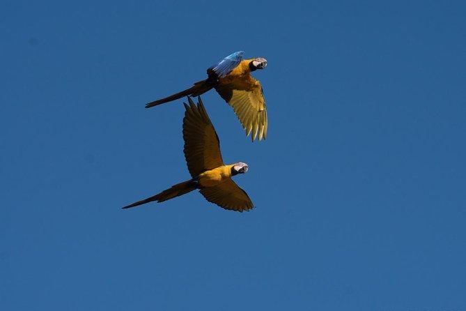 Macaw Clay Lick 3 days & 2 nights, Puerto Maldonado, PERU