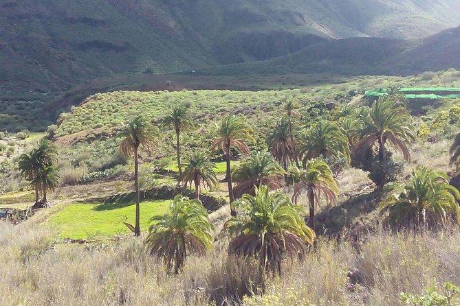 Excursão para grupos pequenos em Safári de jipe de Gran Canaria, Gran Canaria, Espanha