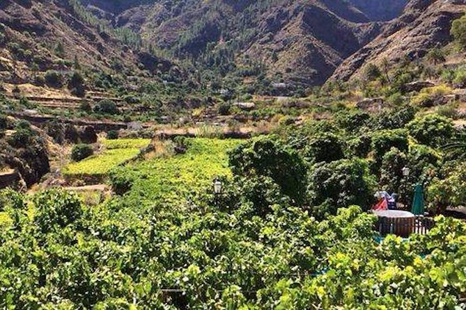 Coffee Plantation & Island Tour, Gran Canaria, Spain