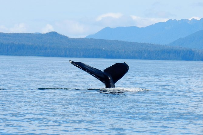 You can trust our 18 years of experience as you embark on a thrilling Whale-watching adventure from Sitka where you spot Humpback whales, Sea Otters and Sea lions along with other amazing marine animals in the waters of Alaska! You'll discover beauty you will never forget on this 2-hour tour that offers an exciting and intimate nature encounter in the comfort of a warm 26-foot Glacier Bay Catamaran. This small-group tour is limited to six people ensuring a more personalized experience. Our local Alaskan guides make each adventure a special one of a kind experience.