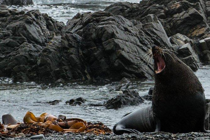 Seal Coast 4WD Safari, Wellington, NUEVA ZELANDIA