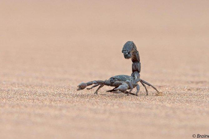 Eco Dune Tour, Swakopmund, NAMIBIA