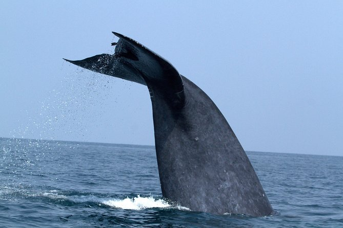 Whales and Dolphin Watching, Galle, SRI LANKA