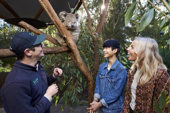 VIP Sanctuary Tour at Healesville Sanctuary Ticket, Melbourne, AUSTRALIA