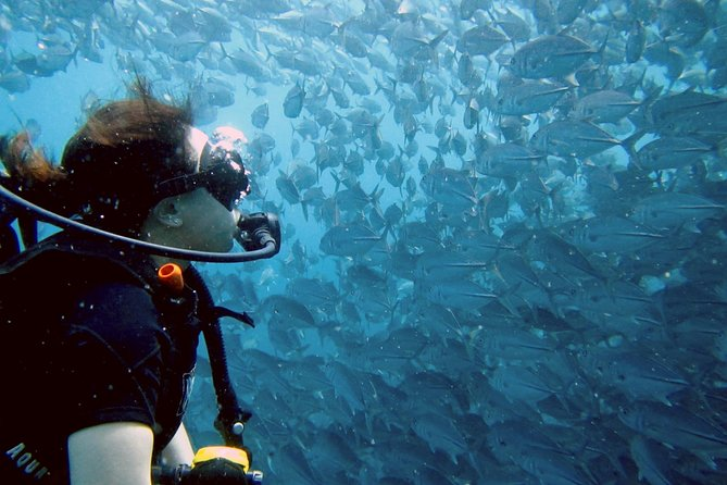 Recorrido con 2 inmersiones en Sail Rock, Koh Samui, TAILANDIA