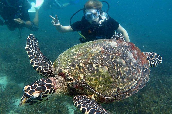 Excursión con 2 inmersiones a Koh Tao, Koh Samui, TAILANDIA