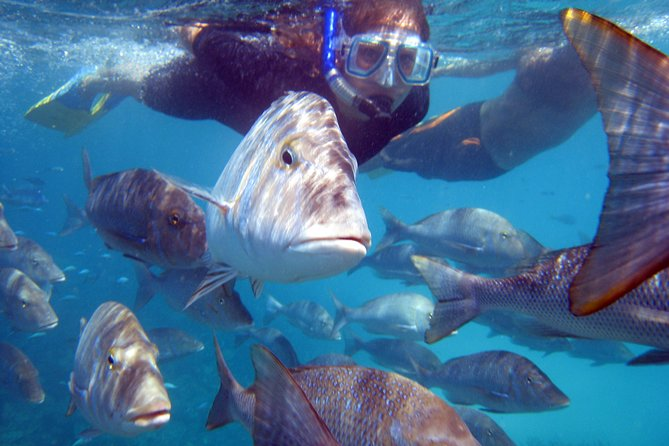 This 2hr tour offers the opportunity tosnorkelat two different snorkel sights onboard our Glass Bottom Boat. As you cruise betweensites, you will beable to view the coral gardens from onboard the boat.