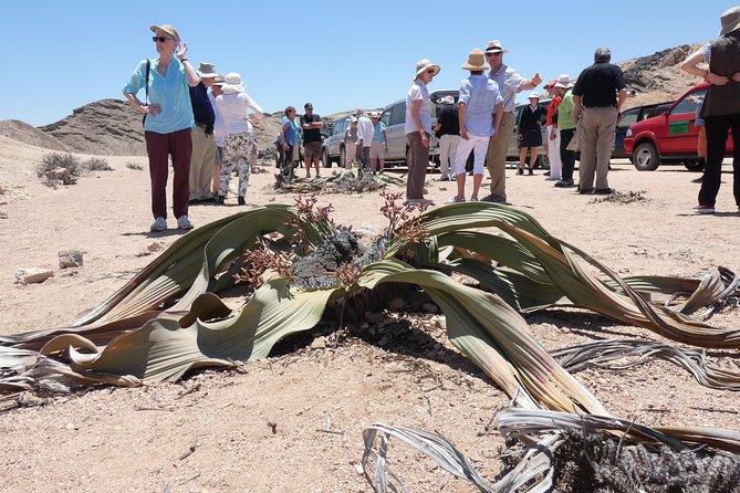 MÁS FOTOS, Moon Land Vally and Welwitschia Plains Namib Desert Swakopmund