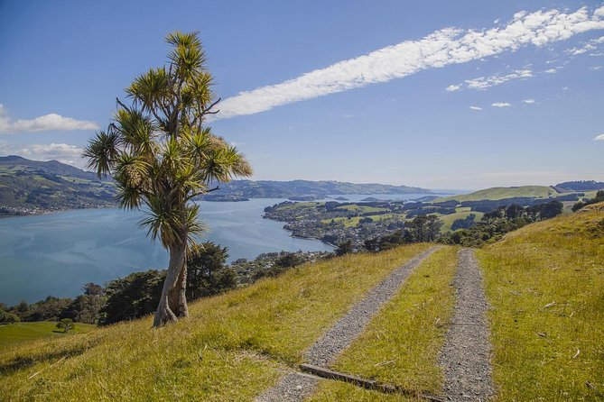 Make the most of your visit to Dunedin, the oldest city in New Zealand, which boasts impressive architecture and many hidden secrets. Escape the crowds and venture out to explore parts of the town belt, coastline and central city on a small group tour packed with interest. Ancient trees, stunning lookouts, beautiful beaches, wonderful architecture and rolling hills await you.