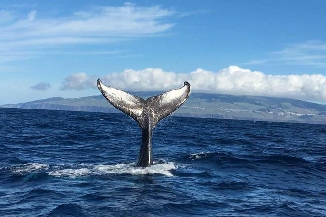 Whale and Dolphin Watching, ,