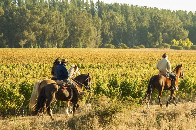 "Discover the amazing Casablanca Valley on this private tour, combine an amazing Horseback ride through the vineyards sceneries with visits to two or three wineries, and taste the incredible Chilean wine to see why Casablanca is one of the ""Ten great wine capitals of the world"", a cool climate valley famous for producing unique white wines and a few reds with characteristics you won't find anywhere else. <br><br>Choose between three options, and we will pick you up at the door of your hotel in Valparaiso or Viña del Mar. <br><br>Discover the taste and landscapes of the Casablanca valley with Ventus Travel & Tours. We're a small, young company runned by the owners looking forward to give you the best possible service"