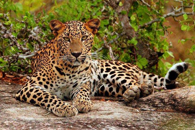 Private Half Day safari at Yala National park, Galle, SRI LANKA