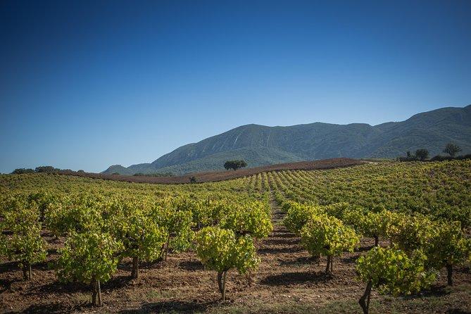 MÁS FOTOS, Recorrido vinícola en la Arrábida