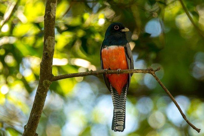 Asuncion Birding Tour, ,