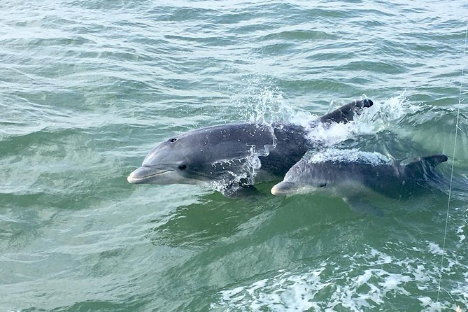 PRIVATE BOAT 1-6 PASSENGERS <br><br>The Private Historical Wildlife & Dolphin Cruise is fun and informative for the whole family! Our small group cruise, no more than 6 passengers insures excellent wildlife encounters. This adventure is 1.5 hr long.