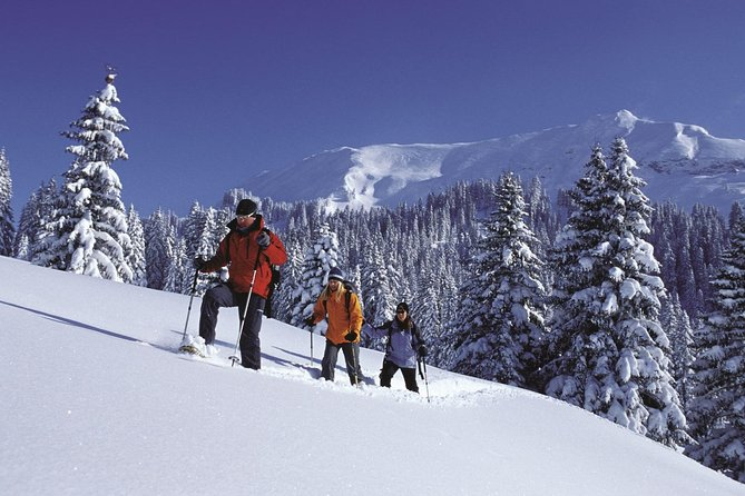 Snowshoe and Sled Adventure in the Swiss Alps from Interlaken, Interlaken, SUIZA