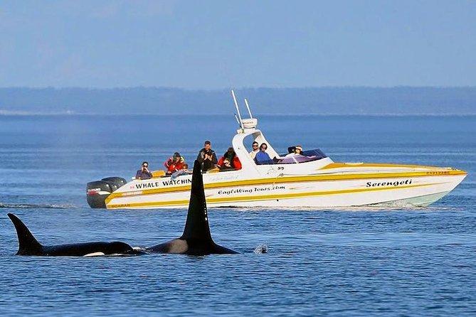 Victoria Whale and Wildlife Cruise, Victoria, CANADA