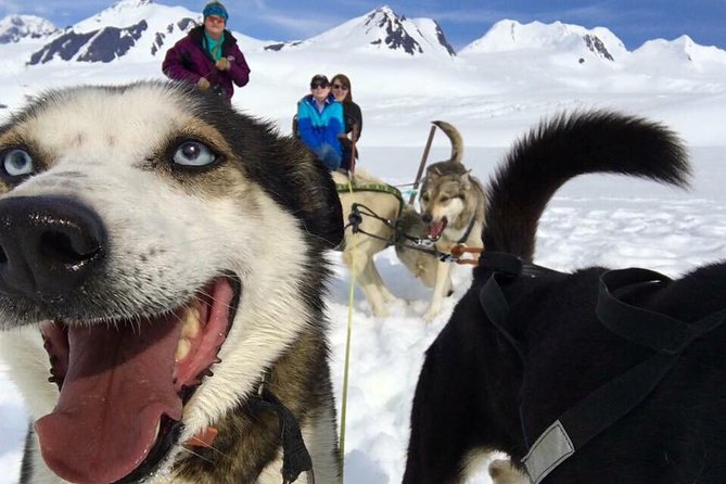 The most popular tour! Drive your ownsled-dog team with 4 time Iditarod winner Dallas Seavey's team of mushers, handlers and champion dogs on real snow in the middle of summer surrounded by amazing scenery. Start this adventure with a helicopter ride over glaciers and icebergs. We often see moose, black bears, Dall sheep and goats. Land on a huge snow eld high on a glacier and enjoy a whole hour with champion sled dogs and their mushers that live here all summer. Take the dog team for an exhilarating ride through real snow. You can stand on the runners and mush your own dog team or just sit on the sled and let the mushers run the team. After your dogsled tour meet the canine athletes that pulled your sled, listen to stories about running sled dog races of over a 1,000 miles long, and of course take pictures with your favorite dogs. After the tour the helicopter takes you back to the lodge and you'll fly over the lower glaciers where you can see the blue melt pools and the crevasses.