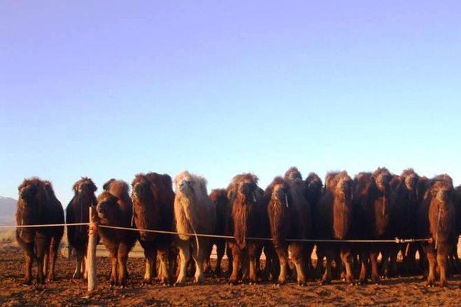 7 day Gobi Desert & Gorkhi Terelj NP tour, Ulan Bator, MONGOLIA
