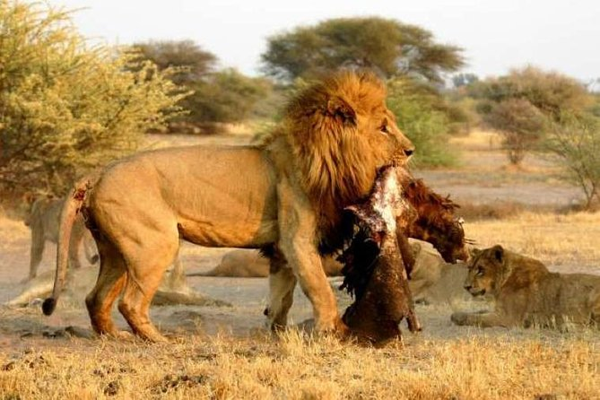 This is the best of Wildlife and the oldest Desert in the world tour.This safari combines the wildlife of the Etosha National Park, with the dunes of the Sossusvlei! Which makes it one of the best tours for a newcomer to explore Namibia's mostly visited areas in the world.