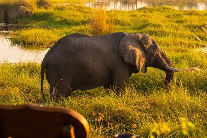 This safari offers an intimate and exclusive wildlife experience in the Chobe National Park area, with some of the best game viewing in Botswana. This is a seven-day itinerary offering guests both dry-land game viewing and a wet-delta experience. You will get to visit the Chobe River Font and go through Botswana then, drive to the Okavango Delta and Maun. Come and experience what Botswana safari has to offer with Enrico's Tours and Safaris.