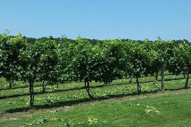 Chesapeake Region Wine Tour with Free Lunch, Baltimore, MD, ESTADOS UNIDOS