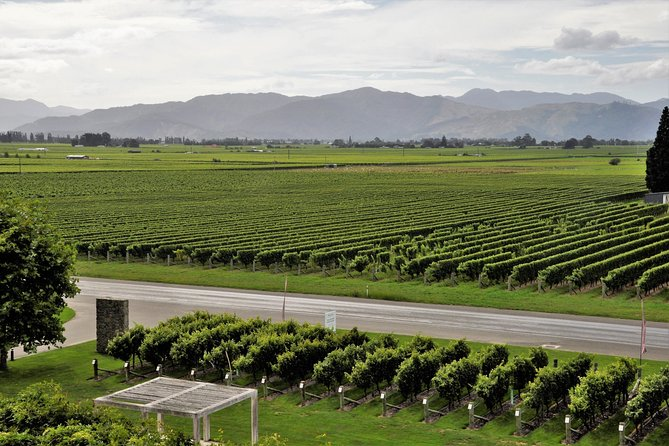 Full day guided wine tour (Not suitable for cruise ship passengers), Blenheim, NUEVA ZELANDIA