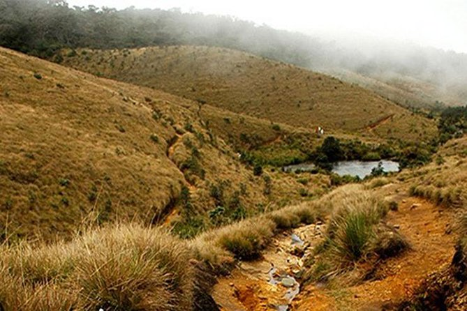 Make an early start to Horton Plains National Park at 06:00. This is a UNESCO World Heritage Site where you'll take a guided walk along the nature trails to a viewpoint known as World's End. A variety of wildlife including endemic Rhino-horned and Hump-nosed Lizards, highland bird species including the Sri Lanka White-eye, Dull-blue Flycatcher, Sri Lanka Bush Warbler, Yellow-eared Bulbul may be encountered. Also keep your eye out for troops of Bear Monkey, and Sambar (Sri Lanka's largest species of deer) which are regularly seen in the plains close to the entrance. You will continue your journey up to Bakers waterfalls.