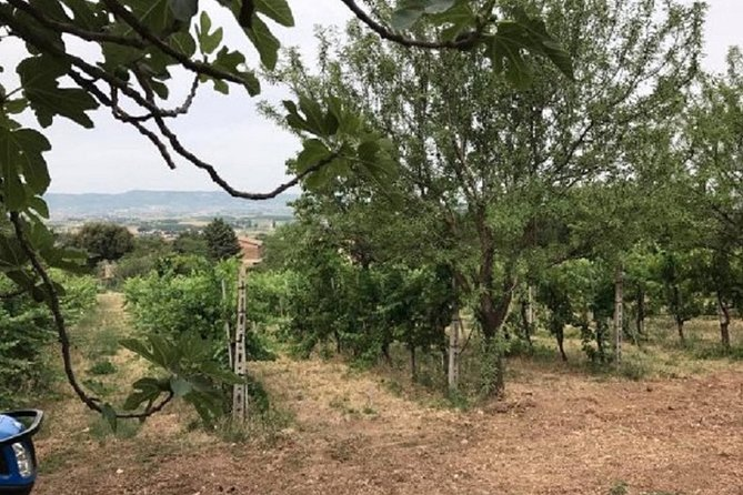 Wine and food tasting in Assisi in a Organic Winery, Assisi, ITALIA