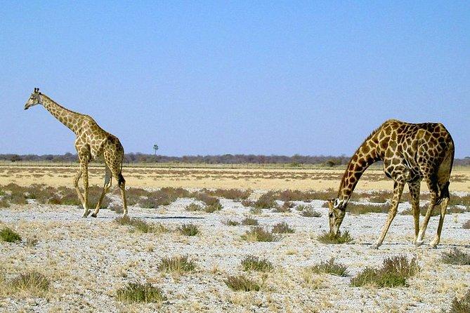 MORE PHOTOS, 8-Day Sossusvlei, Swakopmund & Etosha National Park (Camping)
