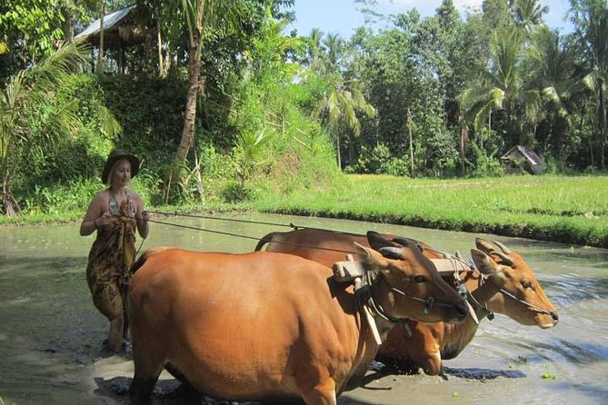 Experience genuine rural life in Bali, hidden far away from the hustle and bustle of the Bali you have already seen. This tour is specially designed to show authentic local lifestyle and daily routines. You will get involved in some local activities and become a part of the community.