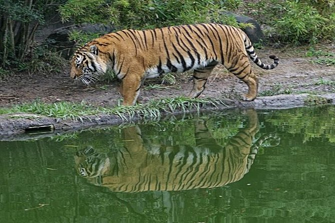 This private day trip takes you to Sundarban to visit some of the most Bangladesh's majestic wildlife sanctuary destinations, including the Karamjal Wildlife Center and Harbaria Mangrove Trail.