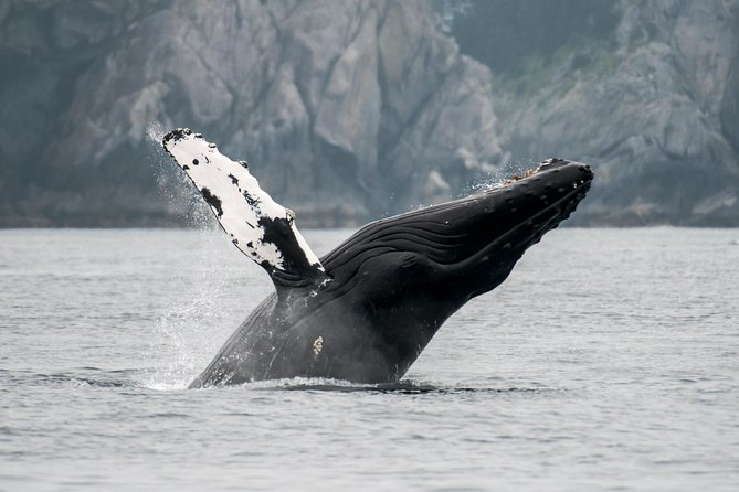 This wildlife viewing excursion takes you on a journey to see two of the major highlights in Southeast Alaska. You will be guided to the Mendenhall Glacier for a 45 minute self-exploration followed by our wildlife whale watching tour. Once you have had a chance to explore the glacier park on your own, we will take you to the whale watching harbor where you will come aboard one of our state-of-the-art vessels to search for majestic Humpback Whales and other water wildlife we may find along the way. Our expert captains and naturalists are so familiar with these amazing creatures that we can actually guarantee you will see whales in their natural habitat from a safe distance. Our boats are equipped with restrooms and heated cabins to make this journey extra comfortable. Our fleet of fast jet boats all have plenty of outdoor deck space so you can choose to watch the wildlife in the open air or from the comfort of the cabin. This is an Alaskan adventure you won't want to miss!
