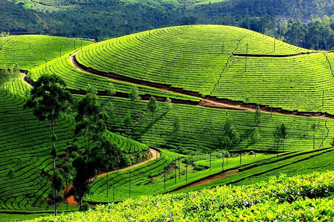 This 13-hour private day trip takes you to Munnar hills,the green Paradise of Kerala. You will see breathtaking views of tea and spice plantations, pristine valleys and mountains, and a variety of flora and fauna. This tour also includes a visit to the Tea Museum and comfortable transport to and from Kochi (Cochin) in a private AC vehicle.