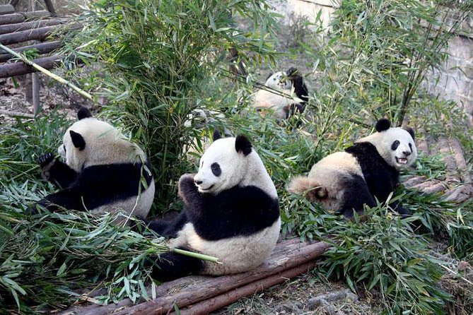 An ideal holiday package to get the most from your China trip to the iconic cities of Beijing and Xi'an, as well as Chengdu, the hometown of lovely giant pandas. The tour takes 9 days to cover the best travel destinations including the Forbidden City, the Great Wall, the Terracotta Warriors and the Chengdu Research Base of Giant Panda Breeding.