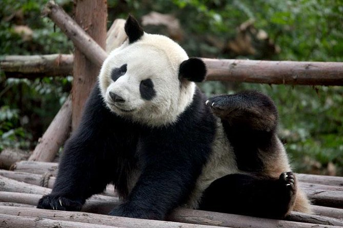 A well-planned escorted China tour with domestic airfare for you to learn the long history and rich culture of the ancient capitals Beijing & Xian, have a close contact with the childlike giant pandas in Chengdu, soften and scent your body from head to toe on the Yangtze river cruise and reach the last destination - Shanghai.