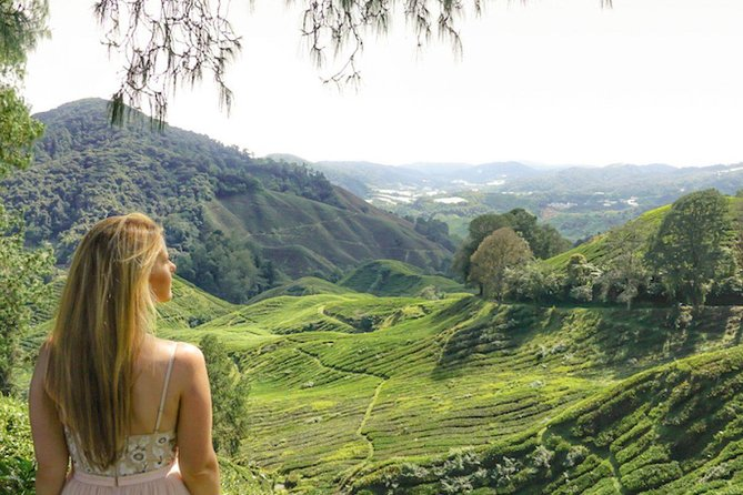 Immerse in the tranquil atmosphere and cool climate of the Cameron Highlands on a day trip from Kuala Lumpur. Renowned for its farmlands, tea plantations, orchards and nurseries, the hill station is a popular getaway from the bustling Malaysian capital. Gain insight into the local culture with a knowledgeable guide who accompanies you to an Orang Asli aboriginal village. En route, you'll see waterfalls, mossy streams and rainforest.<br><br>- Chance to explore stunning hills of the Cameron Highlands<br>- Cameron Highland known as Green Carpet of Malaysia<br>- All year long strawberry fruit available and self picking<br>- Try the famous tea produce while overlooking the tea valley<br>- Convenience return transfer from Kuala Lumpur included