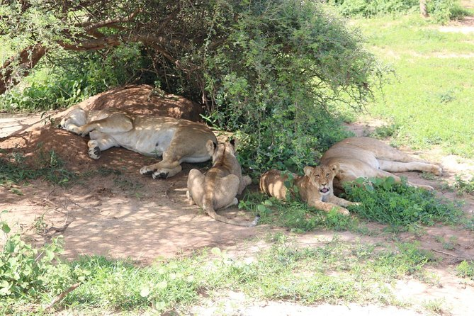 3 Days 2 Nights Murchison Falls National Park Safari, ,