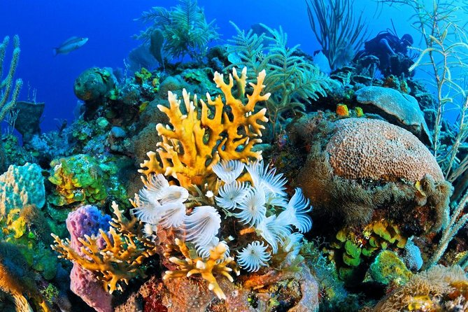 Enjoy a fantastic time on a V.I.P boat and go to the national park of Ras Mohamed to snorkel and enjoy the stunning sea life and corals of the Red Sea. <br><br>This excursion is a wonderful full day out on a boat, which gives you the chance to do some great snorkeling in the best three areas, to see the coral and aquamarine life at it's best. Lunch & soft drinks are provided over the course of the day.