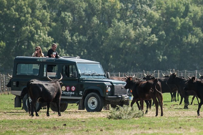 """In this 3h30 tour, you will have the opportunity to take the """"road of senses"""" on a four-wheel drive for three and a half hour. Step by step, you will discover the country. Surprise a pink flamingo in the swamps; see a coypu crossing the trail, or bulls and horses in meadows in the """"Manade""""."""