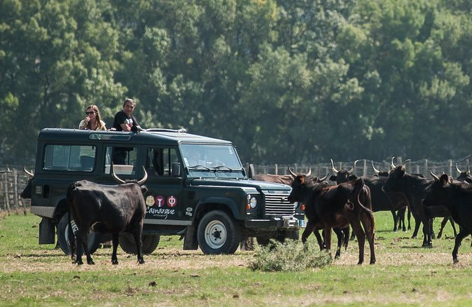 """In this3h30 tour, you will have the opportunity to take the """"road of senses"""" on a four-wheel drive for three and a half hour. Step by step, you will discover the country. Surprise a pink flamingo in the swamps; see a coypu crossing the trail, or bulls and horses in meadows in the """"Manade""""."""