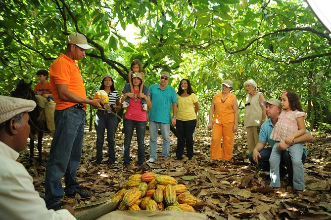 Cacao Plantation and Chocolate Factory Tour with Tasting of Chocolate, Santo Domingo, DOMINICAN REPUBLIC